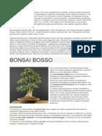 BONSAI BOSSO.docx