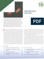 Cell Cycle Lodish 7ed.pdf