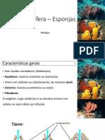 Filo Porifera – Esponjas