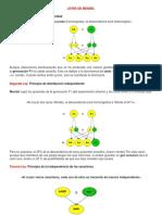 Texto Guía Sobre Leyes de Mendel 7º