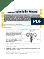 Ficha Reproduccion Del Ser Humano Para Sexto de Primaria