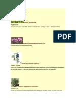 Plantas e Propriedades Secretas Ocultas