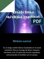332975022-Anatomia-Medula-Espinal.pptx