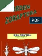 2 SISTEMATICA - NEUROPTERA.ppt