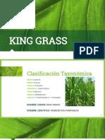 King Grass