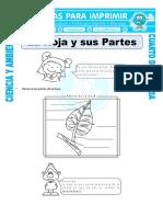 Ficha La Hoja y Sus Partes Para Cuarto de Primaria (5)