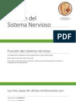 Función Del Sistema Nervioso [Autoguardado]