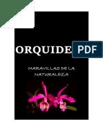 ORQUIDEAS 2