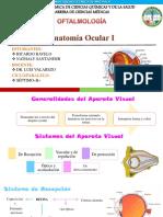 Oftalmología Anatomia Ocular 1