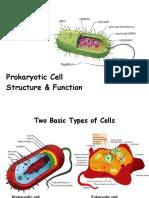 Prokaryotic Cell.ppt