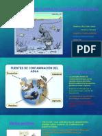Efectos de La Actividad Humana en Los Ecosistemas