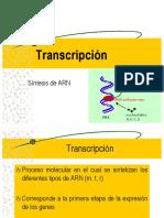 Transcripcion y Traduccion 2019