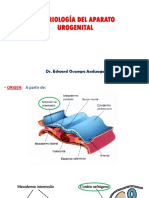 6 Urogenital.pptx