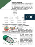 Tipos de celula procariota y eucariota en word
