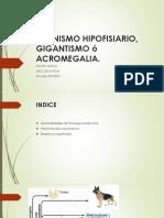 Enanismo Hipofisiario, Gigantismo ó Acromegalia