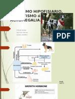 Enanismo Hipofisiario, Gigantismo ó Acromegalia Final
