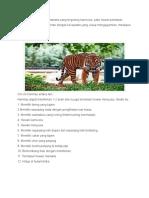 Harimau Adalah Hewan Mamalia Yang Tergolong Karnivora