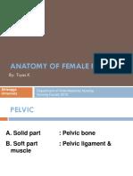 anatomi panggul-2010.ppt
