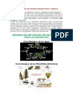Ciclos Biologicos de Las Plantas