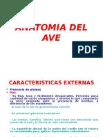 Unidad i - Anatomia Del Ave