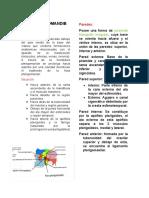 Resumen Region Pterigomandibular