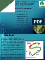 DEGRADACIÓN ENZIMÁTICA.corregido.pptx