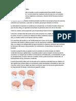 Desarrollo Neuronal