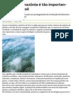19.09 Amazonia Importante Para Brasil