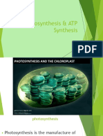 Photosynthesis & ATP Synthesis