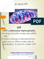 Respiration and ATP Synthesis