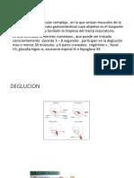 Presentacion de Deglucion