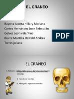 EL CRANEO