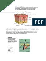 Cómo es la estructura de la piel.docx