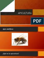 APICULTURA ALLAN PRESENTACION.pptx