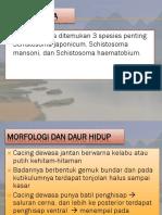 Schistosoma.pptx