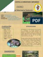 Añuje Castaño (Guatin) Fauna Exitu