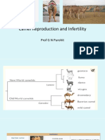 Lecture 18 Camelid Reproduction and Infertility