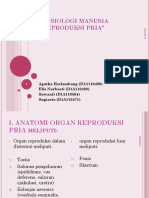 Sistem Reproduksi Pria Ppt