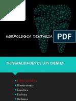 morfologia dental