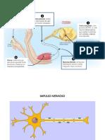 cuidados sistema nervioso.pptx