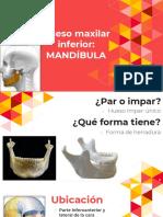 Cabeza y Cuello Mandíbula