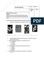 Prueba-Microorganismos-5, buena..docx