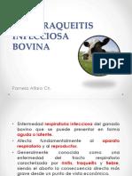 Rinotraqueitis infecciosa bovina