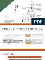 organos linfoides.pptx