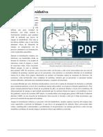 fosforilacion_oxidativa.pdf