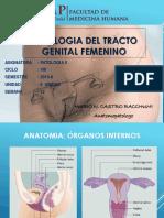 patología del tracto genital femenino