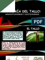 SEMINARIO - TALLO.docx