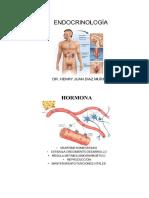 Endocrino  fisiología