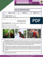 FICHA ESPECIES PRIORITARIAS - GUACAMAYA ROJA.pdf