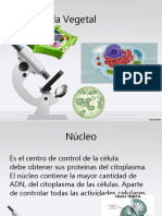 célula-vegetal-equipo.ppt